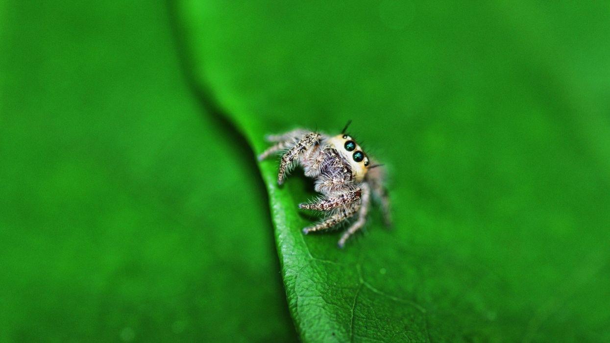 36251537-spider-wallpaper wallpaper