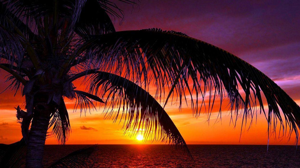 35978659-tropical-sunset wallpaper