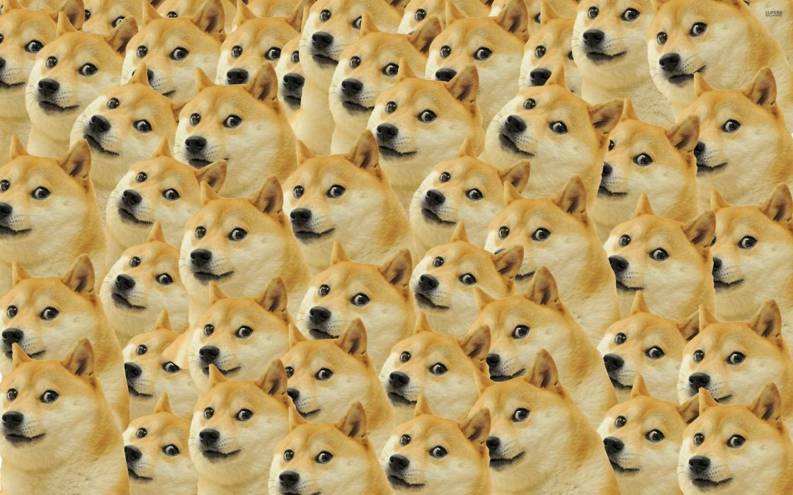 35971330-doge-wallpaper wallpaper