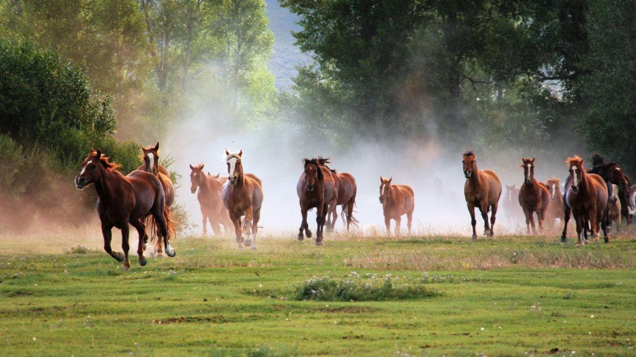 35921096-horse-wallpaper-hd wallpaper