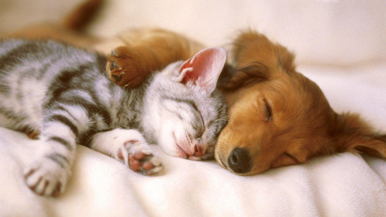 36421937 Cute Animal Wallpaper Wallpaper 2560x1440 1037619 Wallpaperup