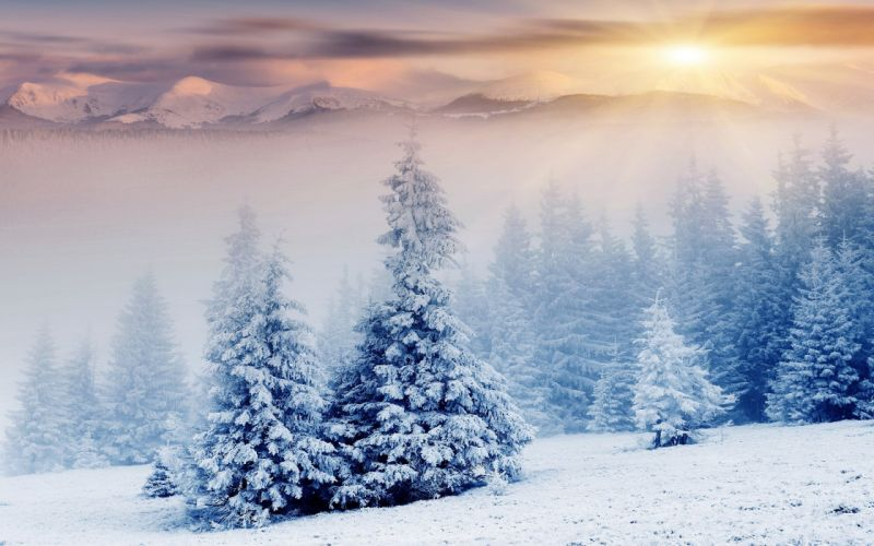 36146972-snow wallpaper