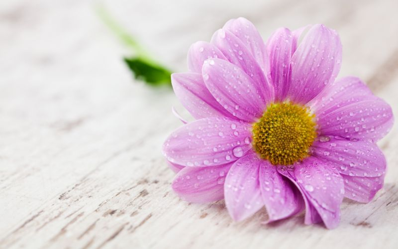 35897232-images-flowers wallpaper