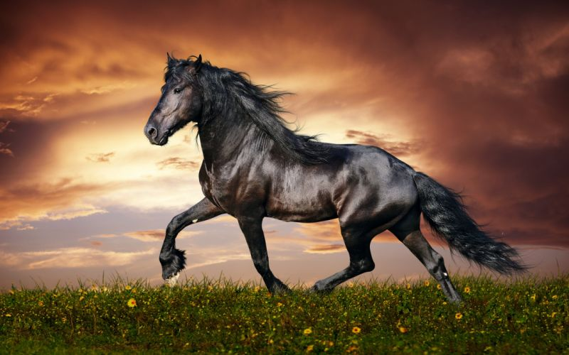 35847832-horse-images wallpaper
