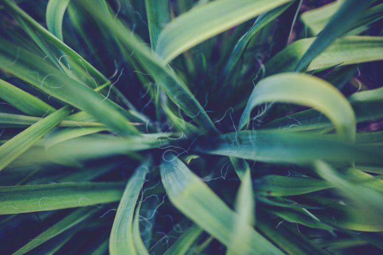 hojas planta naturaleza wallpaper