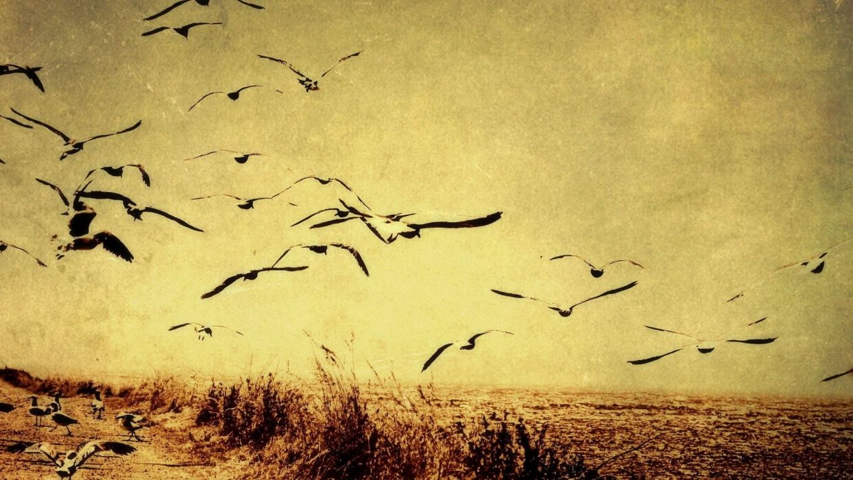 Birds Flying Vector Designs wallpaper