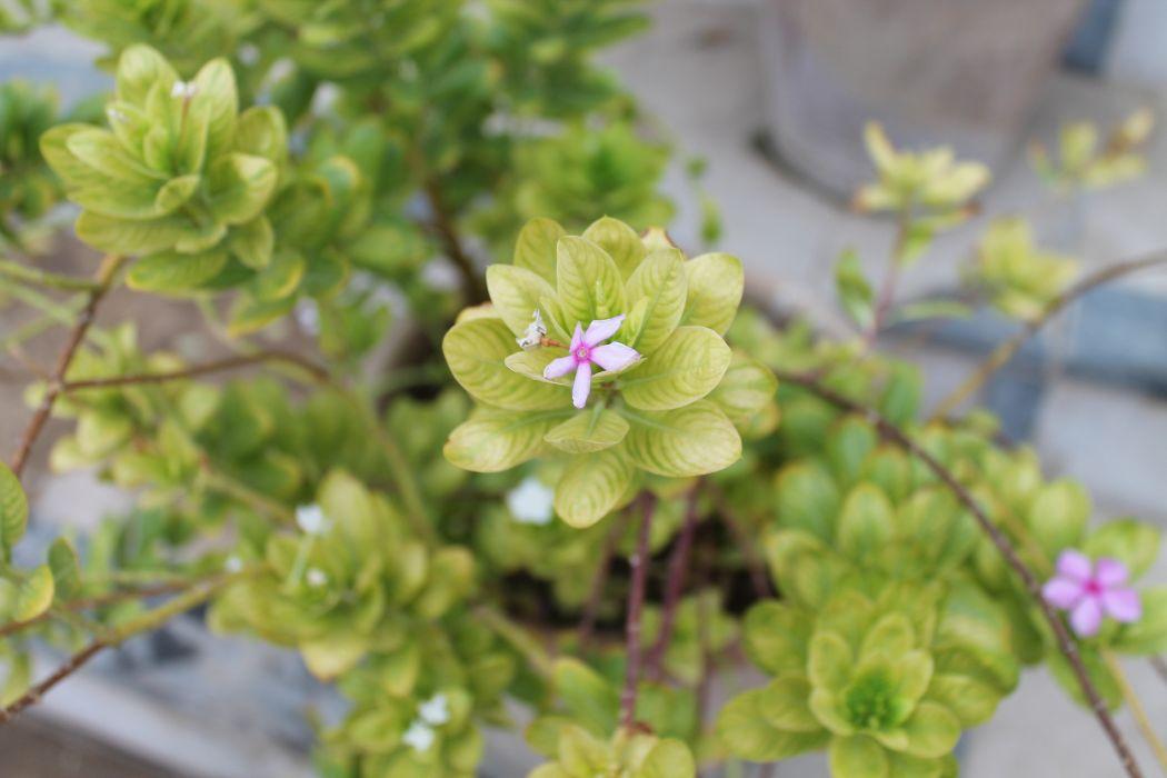 naturaleza planta flores wallpaper