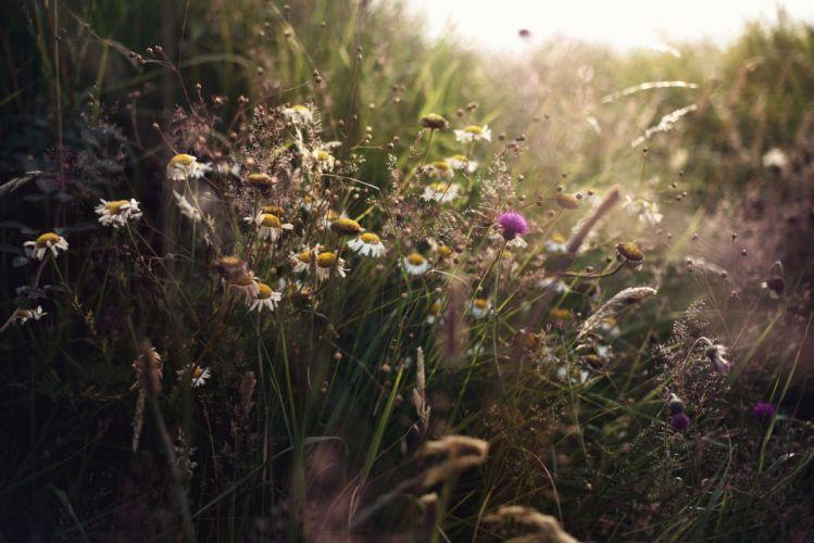 plantas silvestres flores naturaleza wallpaper