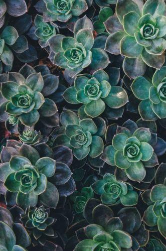 olantas naturaleza hojas verdes wallpaper