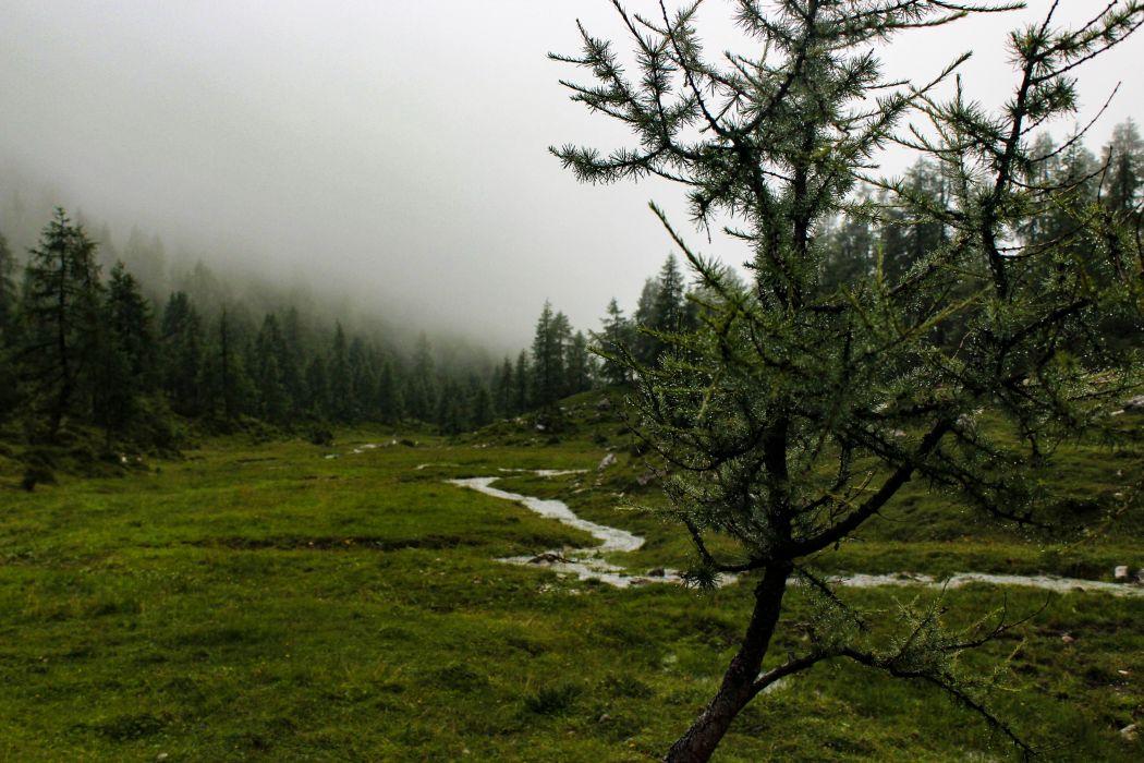 naturaleza rio bosque wallpaper