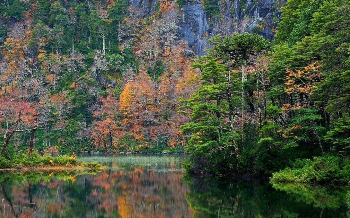 Chile Colorful Fall forest lake landscape mountain National Park nature reflection Shrubs Trees wallpaper