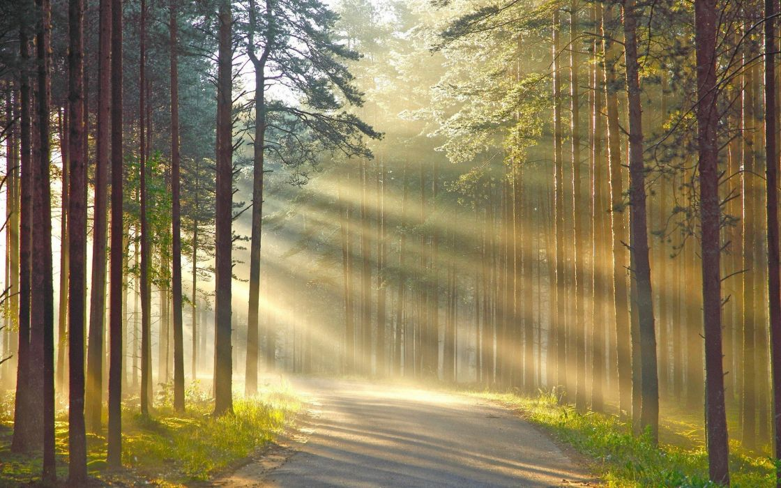 branch forest grass leaves nature road shadow Sun Rays Trees wood wallpaper