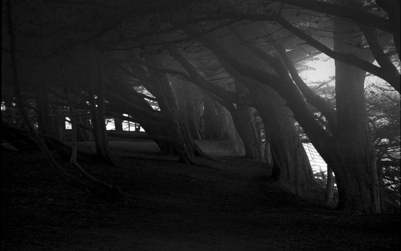dark Trees wallpaper