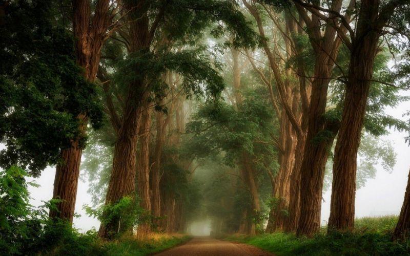 Dirt Road landscape mist Morning nature Shrubs Trees wallpaper