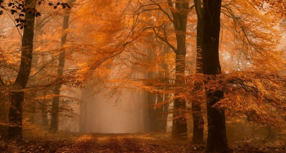Amber Dirt Road Fall forest landscape leaves mist nature Netherlands path wallpaper
