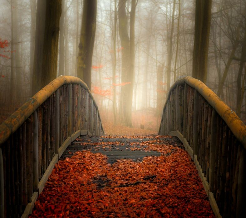 bridge leaves nature wallpaper
