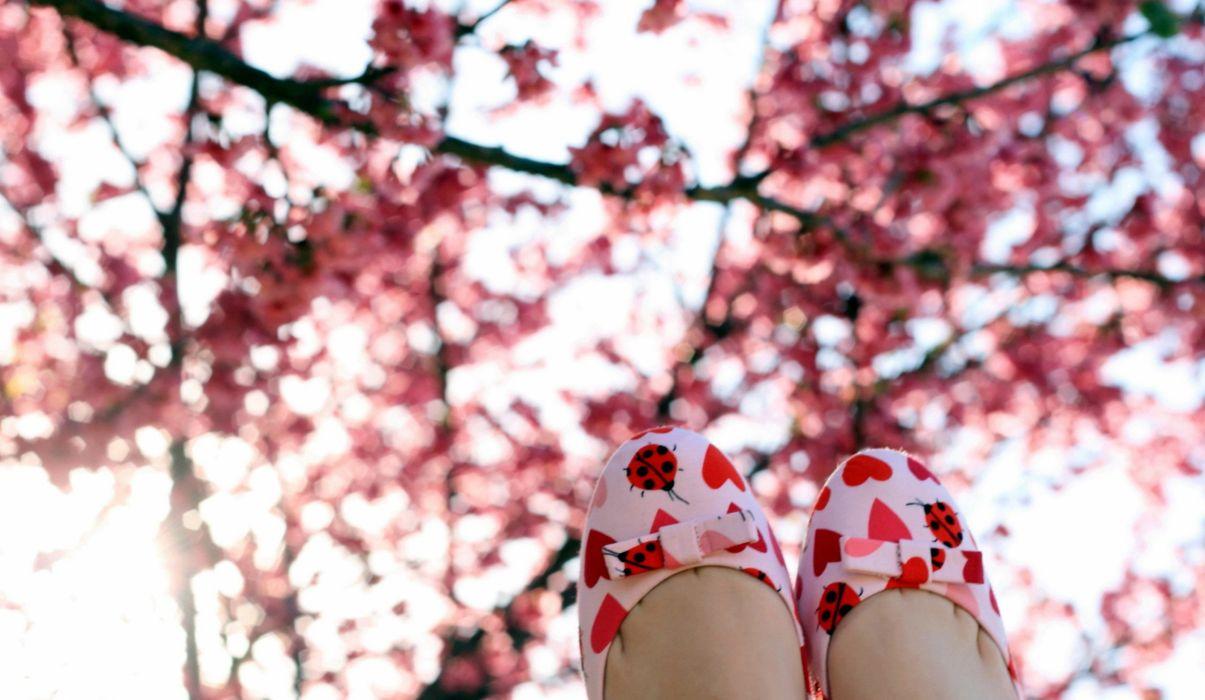 destop photos flower images flower wallpapers focus images free wallpapers hd images wallpaper