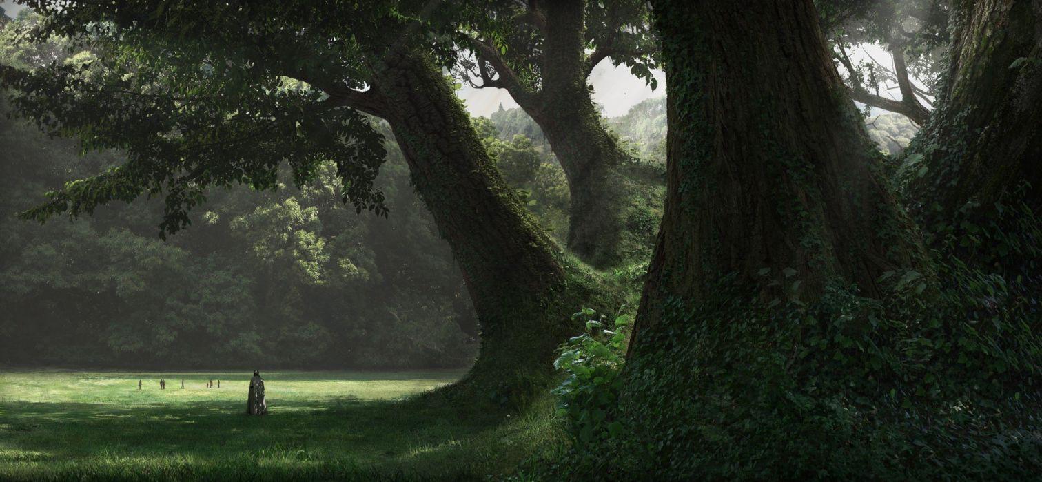 grandes arboles bosque naturaleza wallpaper