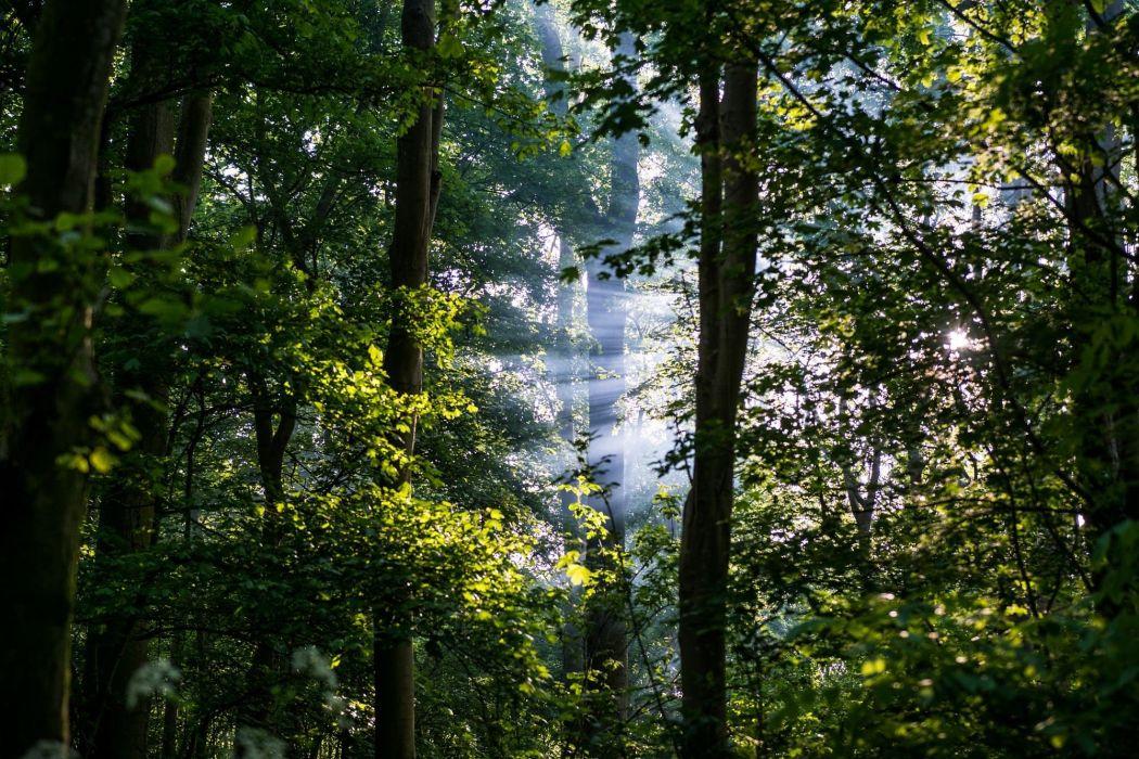 bosque naturaleza arboles wallpaper