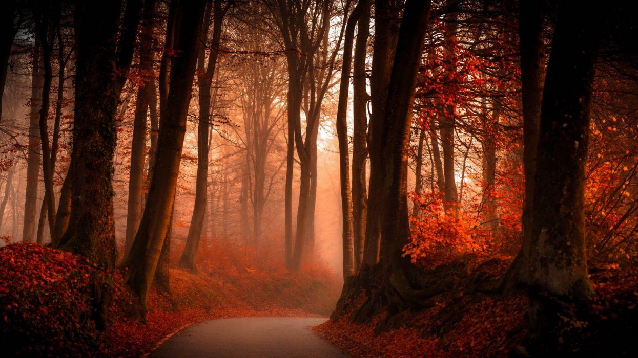 autumn forest-2560x1440 wallpaper
