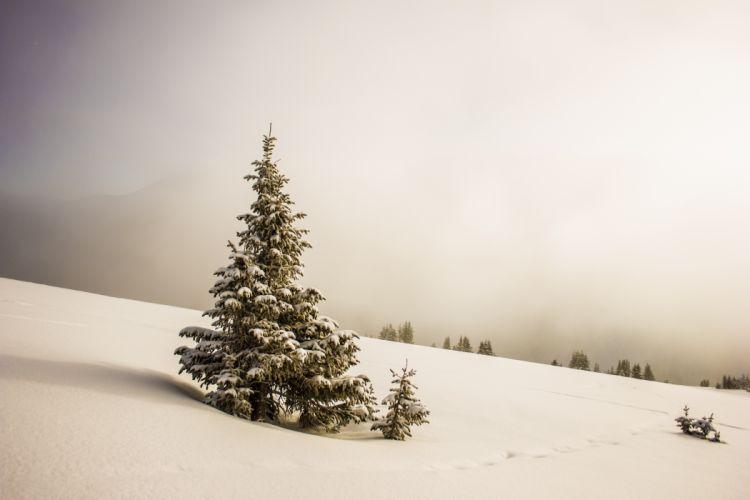 pino arbol nieve naturaleza wallpaper