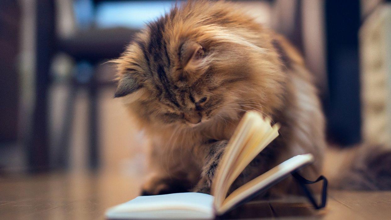 Cat Reading  wallpaper