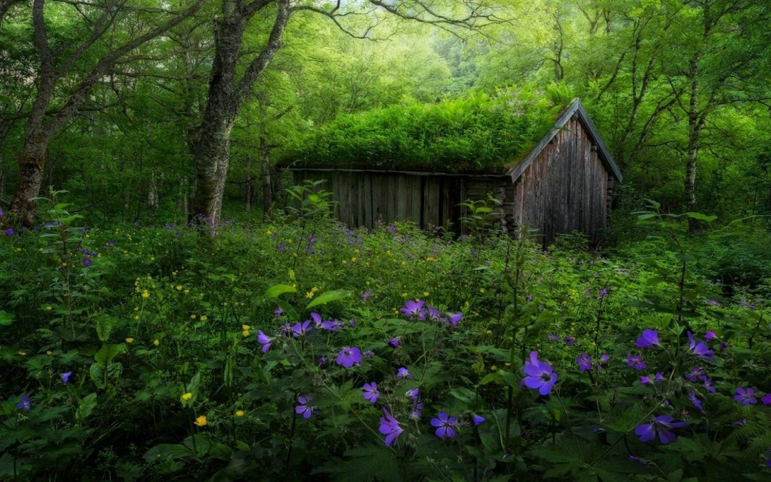abandoned forest Green Hut landscape nature Norway Purple Shrubs Spring Trees Wildflowers wallpaper