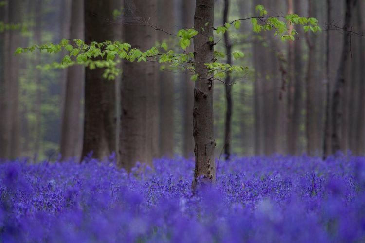 Blue Flowers branch Depth Of Field field flowers forest landscape leaves nature Trees wallpaper
