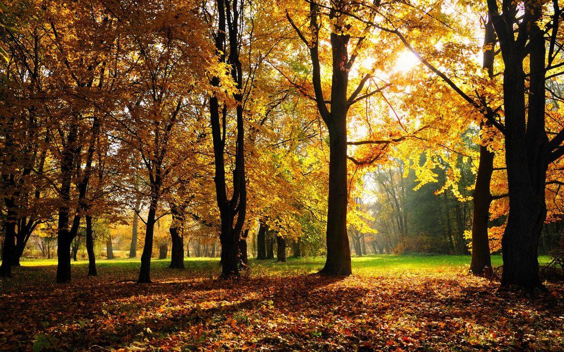 Autumn Season wallpaper