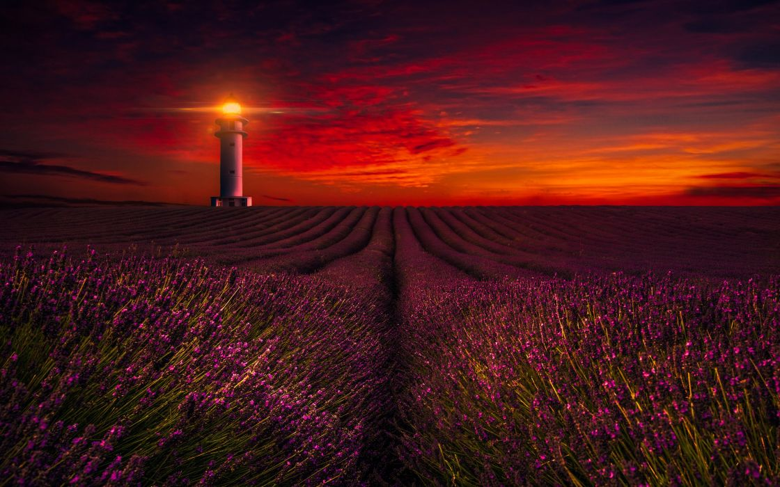 Sunset Lavender Field Lighthouse wallpaper