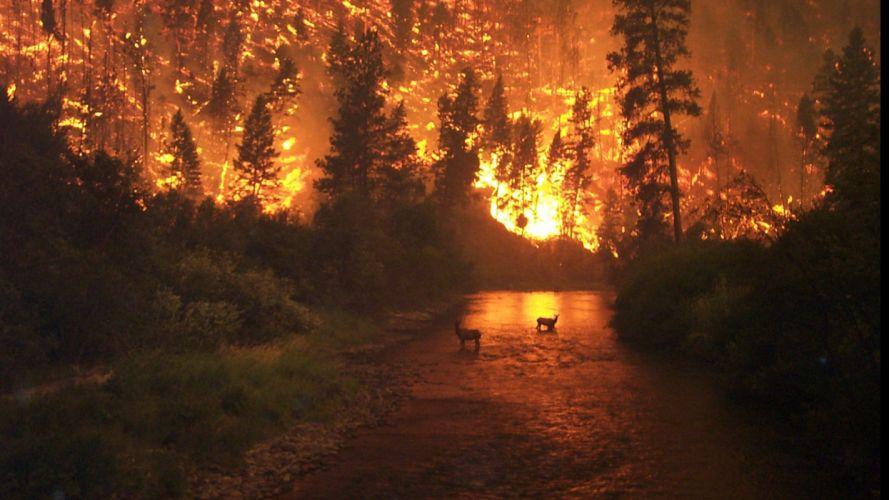 incendio bosque ciervos fuego naturaleza wallpaper