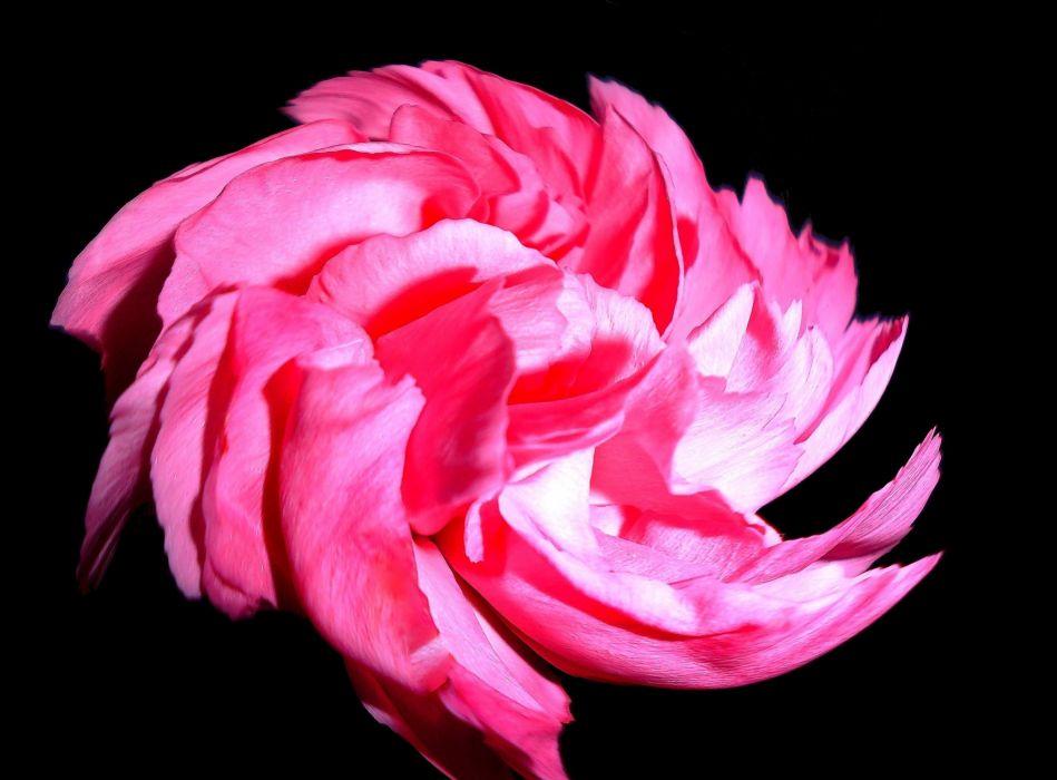Digital Art Blossom Bloom Fantasy Computer Graphics wallpaper