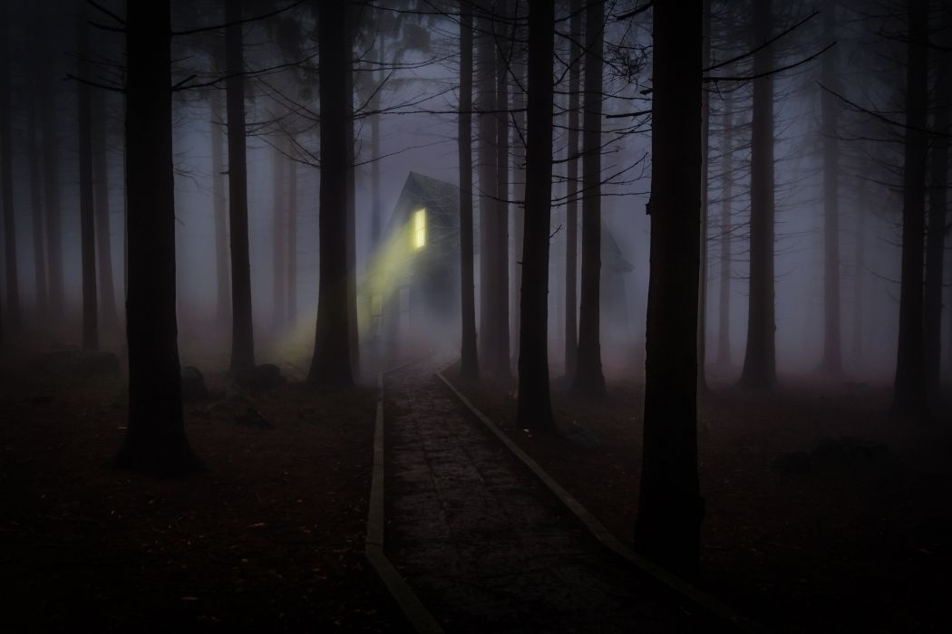 Foggy Mist Forest Trees Spooky Haunted Wooden wallpaper