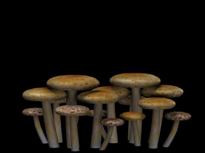 Mushrooms Fantasy Digital Art Isolated Png wallpaper