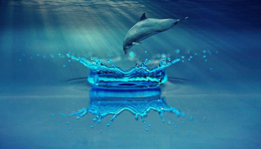 Dolphin Animal Marine Mammals Water Sea Ocean wallpaper