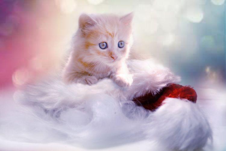 Kitten Grey Heart Cat Christmas Pet Young Cat wallpaper