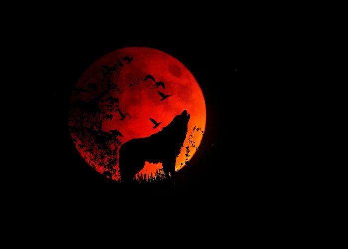 Full Moon Moon Wolf Animal Mystical Night Howl wallpaper
