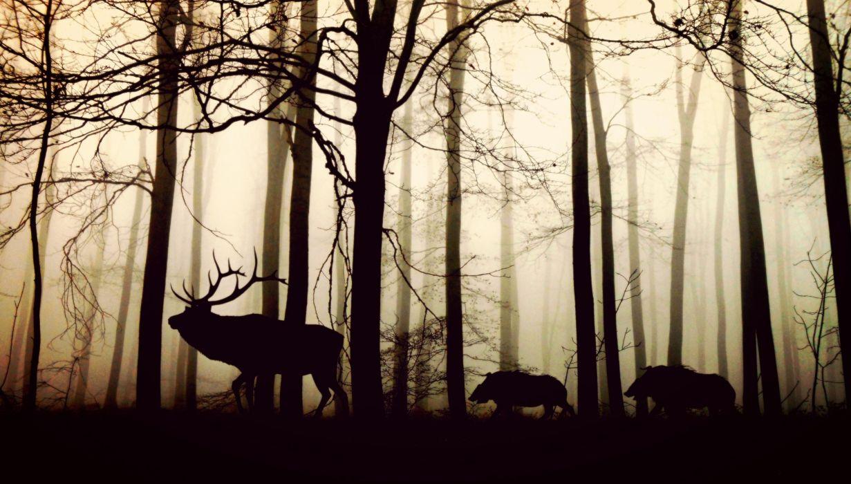 Forest Fog Hirsch Wild Boars Nature Animals Trees deer wallpaper