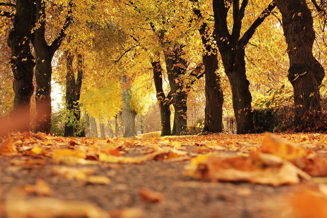 Trees Avenue Autumn Away Mood Outdoor Fall Leaves wallpaper