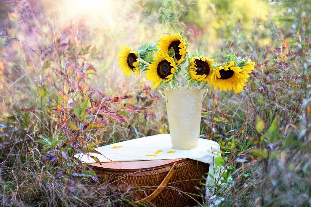 Sunflowers Vase Fall Autumn Bouquet Flowers wallpaper