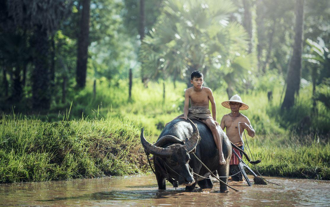 Buffalo Agriculture Asia Cambodia Kids China asian wallpaper