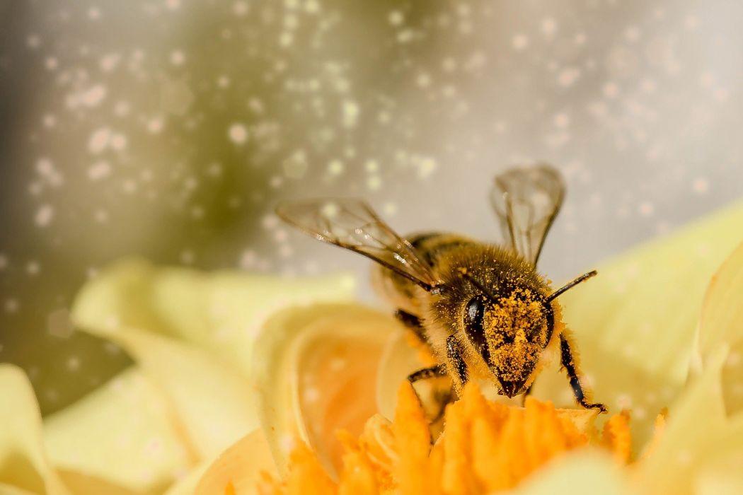 Mist Bee Blossom wallpaper
