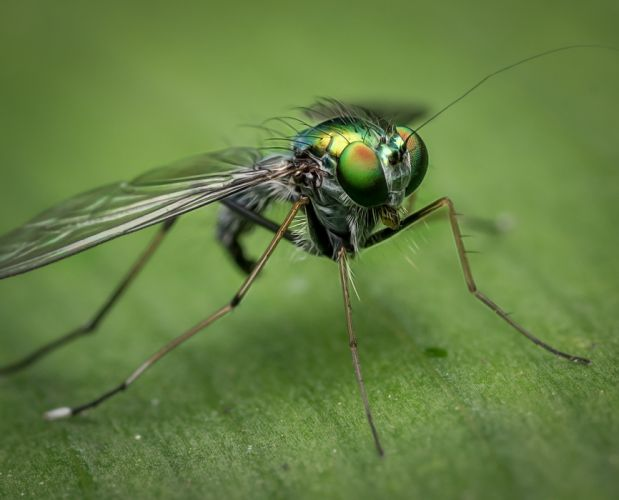 Macro Fly Nature Insect Bug Green Colour Detail wallpaper