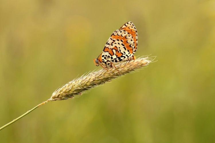Butterfly Meadow Nature Macro Summer wallpaper