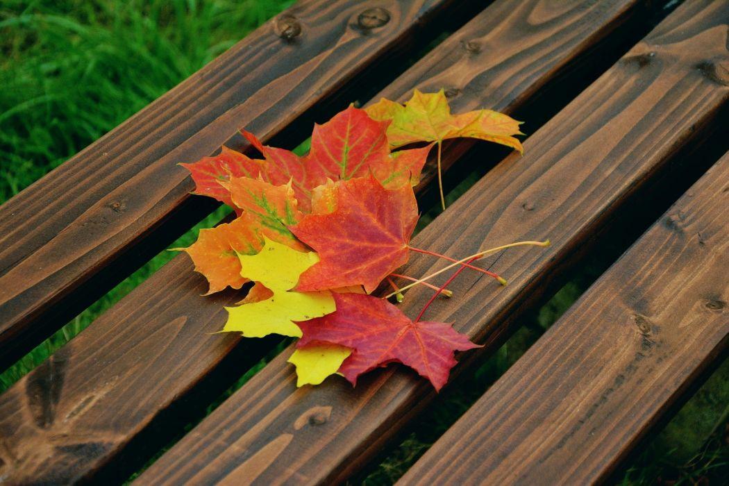 Fall Foliage Maple Leaves Autumn Colour wallpaper