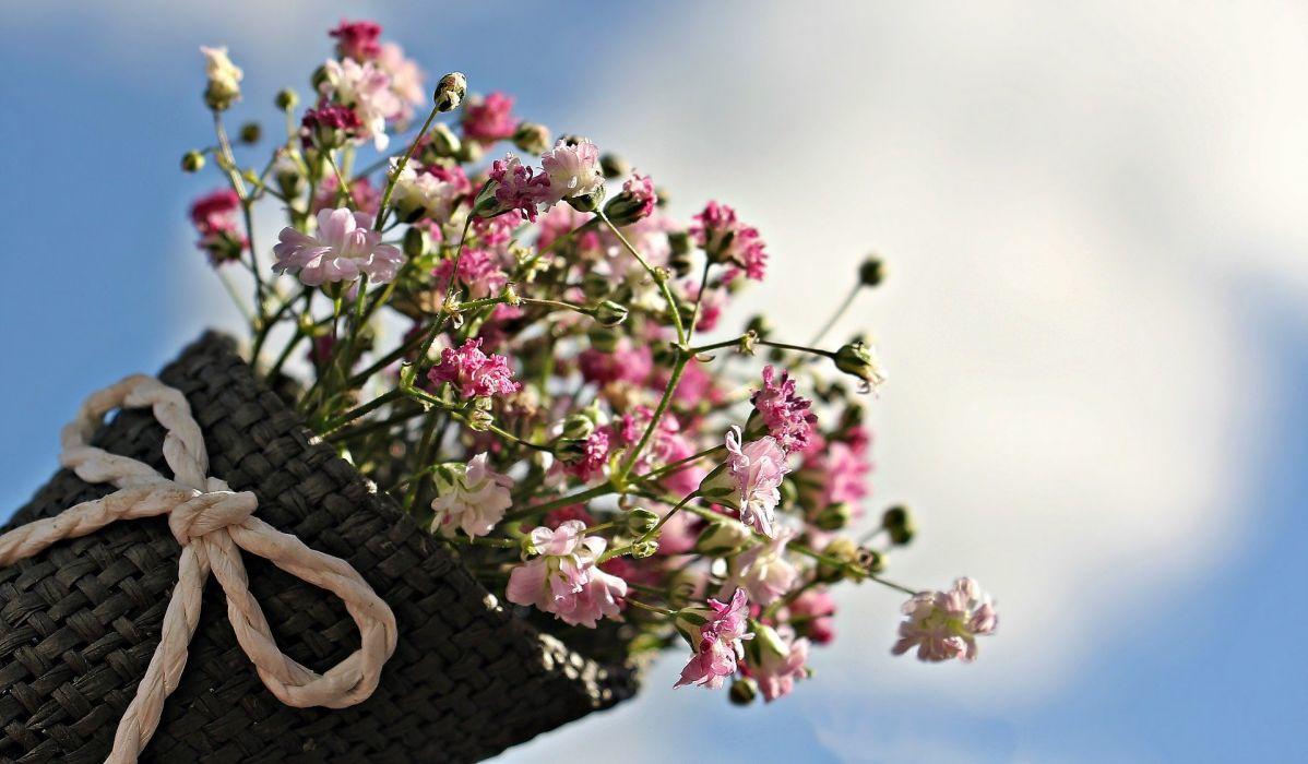 Bag Gypsofilia Seeds Gypsophila Bag bouquet wallpaper