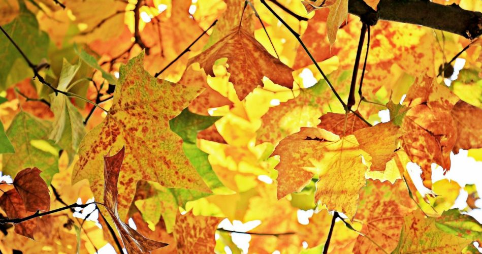 Autumn Fall Leaves Leaves wallpaper
