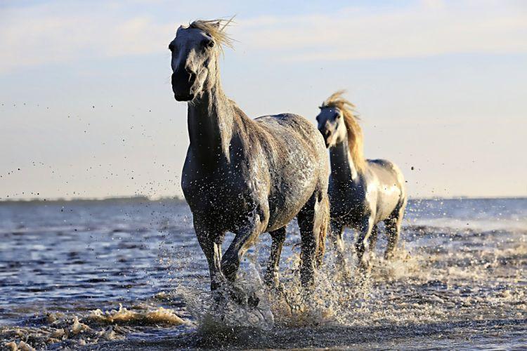 Horse White Horsehair Equine Horseback Riding Mane wallpaper