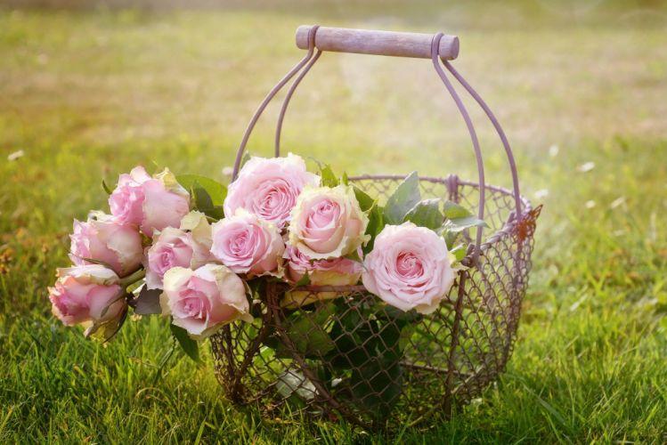 Roses Blossom Bloom Pink Rose Rose Bloom bouquet wallpaper