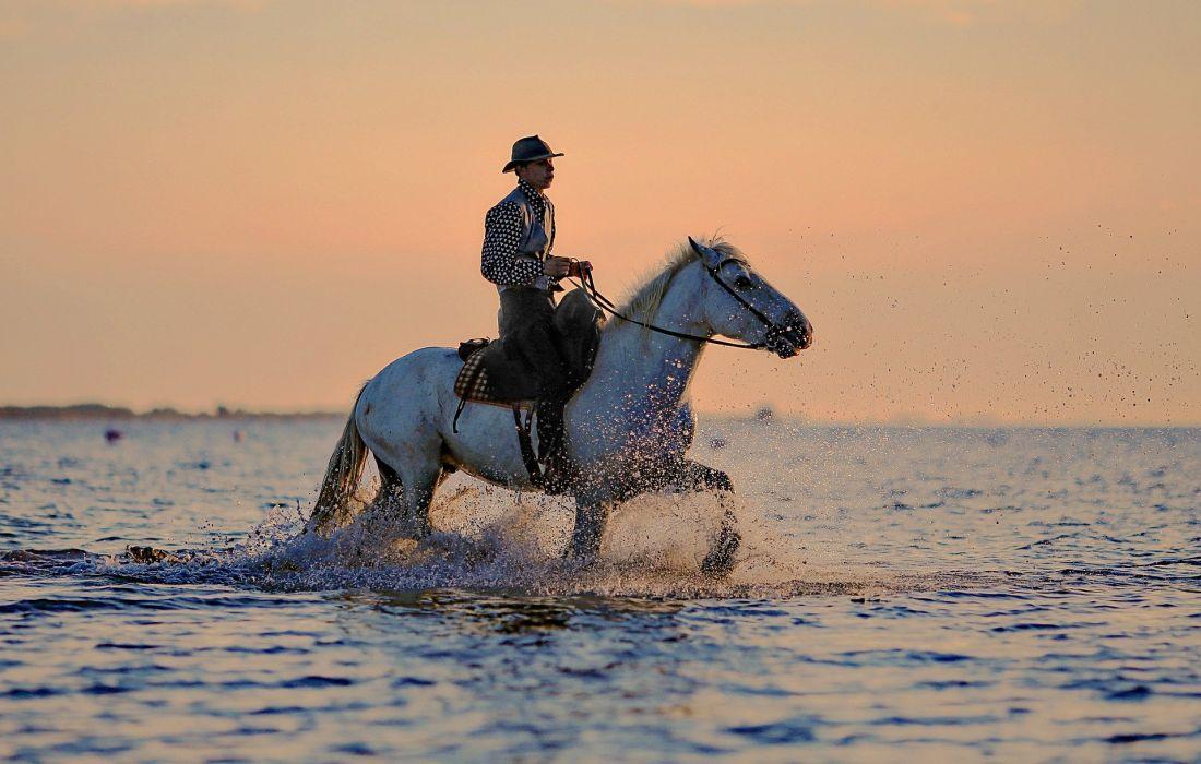 Horse Horseback Riding Animal wallpaper